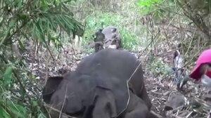 Encuentran 18 elefantes muertos en la India: fue un rayo
