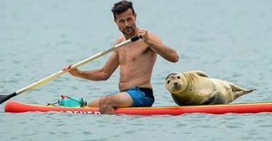 Esta foca marina roba el corazón de los surfistas con su amor por los paseos