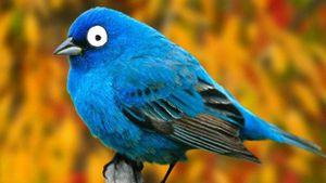 Twitter Blue sería el nombre de la versión premium y este sería su precio