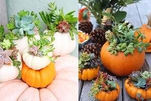 Calabazas con suculentas, la decoración más elegante para el otoño que puedes hacer tú misma