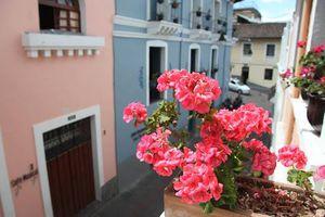 """El geranio de Quito es considerado como """"la flor eterna"""""""