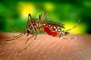 Mosquitos autodestructivos son liberados por empresa financiada por Bill Gates