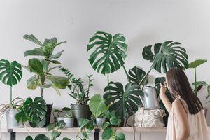Plantas de exterior fáciles de cuidar que también sirven para interior