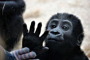 Investigación sobre los monos encuentra que los primates usan señales de saludo y despedida para iniciar o terminar encuentros