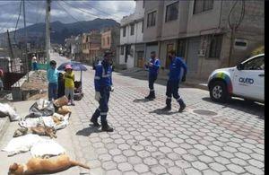 ¡INDIGNANTE! 20 perros fueron envenenados en Quito