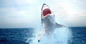 Científicos encuentran una curiosa similitud entre los intestinos de tiburón y una válvula que Nikola Tesla diseñó hace más de 100 años