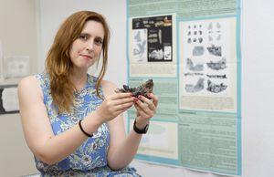 Descubren dos especies de pseudo - caballos que vivieron hace 37 millones de años