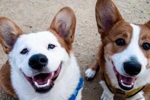 Coronavirus: perro de un paciente fue colocado en cuarentena por posible contagio