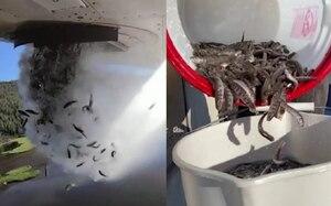 ¡Impresionante! Liberan desde avión miles de peces para repoblar lagos de Utah