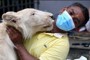 Rescatan a león sin garras ni colmillos gracias a video viral de TikTok