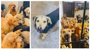 """El 'Refugio Amigos de Isabella' necesita """"una pata amiga"""" para evitar que más de 200 perros sean desalojados"""