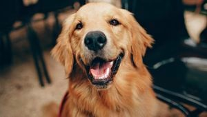 El amor a los animales te ayuda a valorar y ver lo mejor de la vida