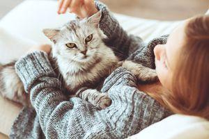 Traicioneros: gatos no tienen problema en ir con una persona que hizo daño a su dueño, según estudio