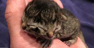 Divulgam vídeo de gato que nasceu com duas caras