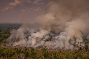 Amazonia sufre en agosto su mayor deforestación desde hace 10 años