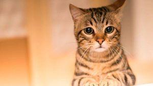 Sentencian a nueve días de prisión y multa a hombre que envenenó a tres gatos