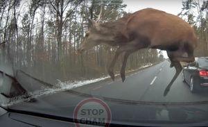 Vídeo registra momento em que manada de cervos cruza estrada e acaba colidindo com esportivo em alta velocidade