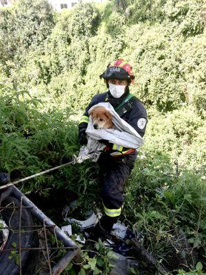 Quito: así fue el rescate de un perrito ciego que cayó en una quebrada