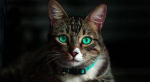 Estudio afirma que los gatos reflejan de la personalidad de sus dueños