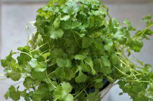 Los mejores consejos y una guía rápida para cuidar tus plantas aromáticas