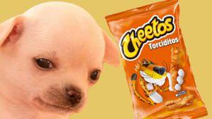 Ciencia: ¿Por qué las patas de los perros huelen a Cheetos?