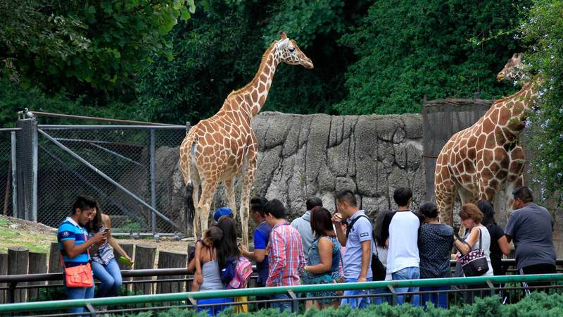 Morena busca desaparecer zoológicos en la Ciudad de Mexico