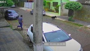 Vídeo registra momento dramático em que pinscher é atacado por cachorro maior