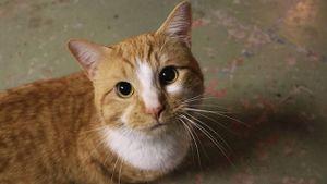 Internet: foto que esconde un gato se vuelve viral en redes sociales