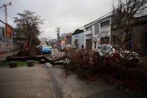 Intensas lluvias en la RM dejan calles anegadas, caídas de árboles y cortes de luz
