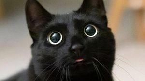 Gatos negros corren peligro durante Día de Muertos por esta razón