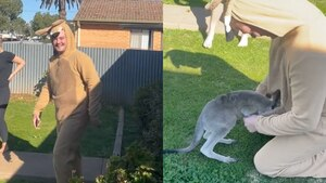 Chico disfrazado de canguro logra que un canguro bebé se resguarde en su bolsa